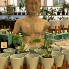 Natural-finish-Buddhas