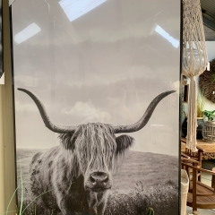 Highland-cow-art