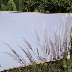 Pampas-grass-photo-art